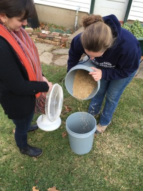 FST students Gianna Fazioli and Stephanie Box use a table fan to winnow chaff from rye seed.
